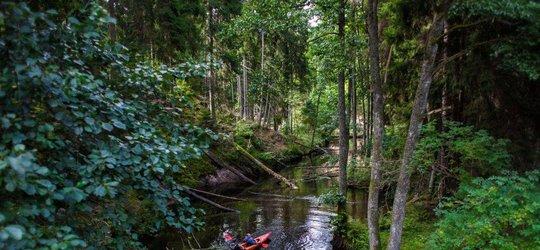 Spływ kajakowy Brdą