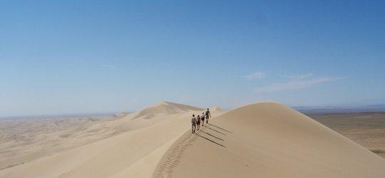 Na pustyni też jest życie!